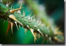 thorns_on_green