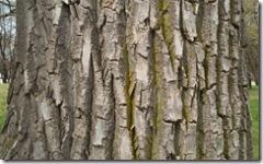 bark (Small)
