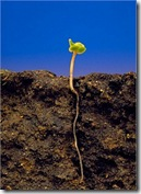 soilandseedling